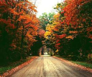 colors, fall, and trees image