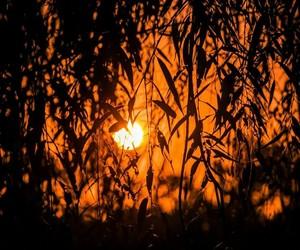 autumn, beautiful, and sunset image