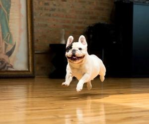 bulldog, dog, and cute image