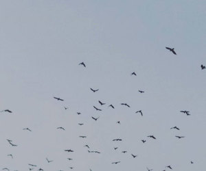 birds, gloomy, and sky image