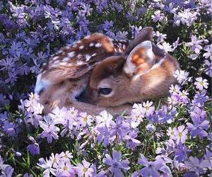 animals, cute, and deers image