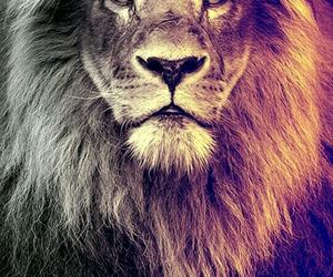 lion, animal, and wallpaper image