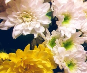 flowers, природа, and white image