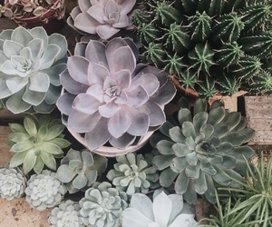 succulente and nature image