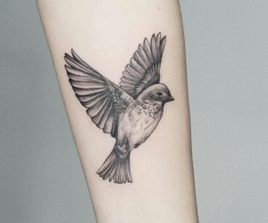bird, black, and ink image