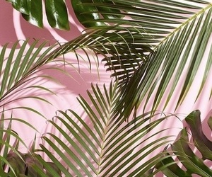 green, pink, and palm image