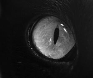 cat, eye, and black image