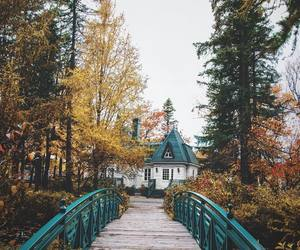 nature and autumn image