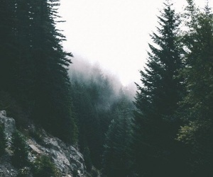 forest, travel, and tree image