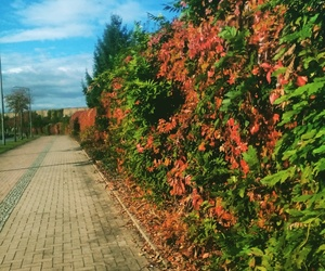 autumn, nature, and sky image
