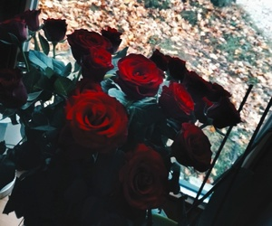 fall, red, and roses image