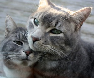 cats, dating, and cute image