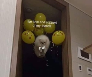 balloons, reaction, and wholesome image