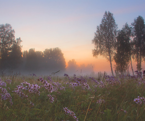 flowers, fog, and forest image