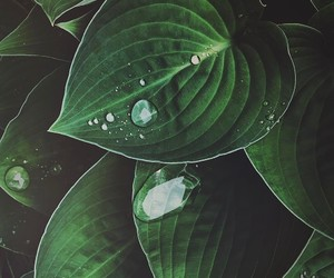 green, leaves, and rain image