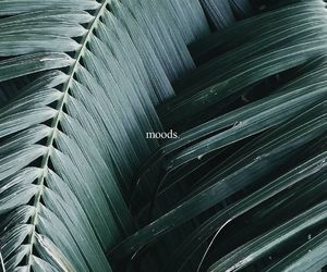 mood, green, and plants image