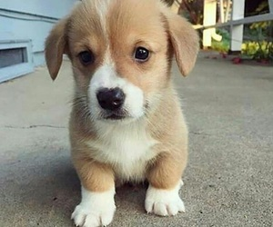 dogs, pet, and puppy image