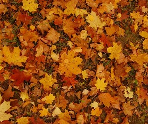 autumn, brown, and Dry Leaves image