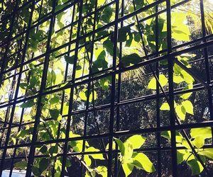 vines and fence image