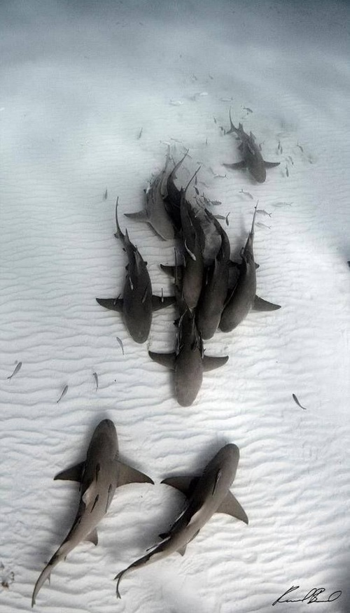 shark, animal, and ocean image