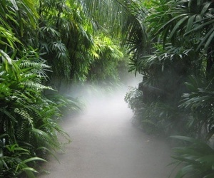 green, fog, and nature image