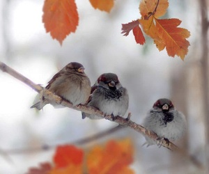 autumn, birds, and photography image