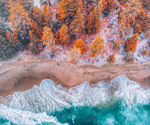 nature, trees, and autumn image