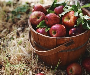 autumn, apples, and cozy image