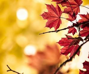 amazing, arbol, and autumn image