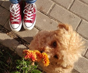 autumn, dog, and converse image