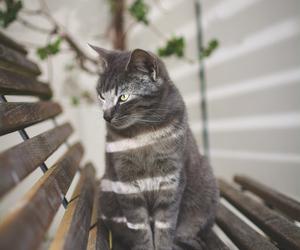 cat, animals, and pet image