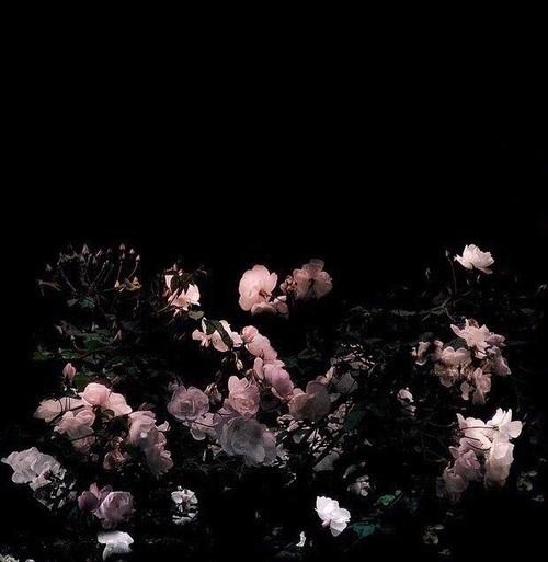 flowers, dark, and black image