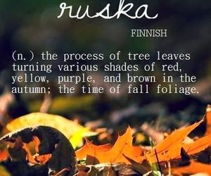 autumn, words, and ruska image