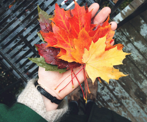 fall, leaves, and hands image