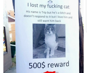 funny, images, and kittens image