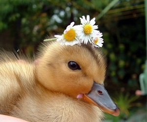 duck, cute, and flowers image