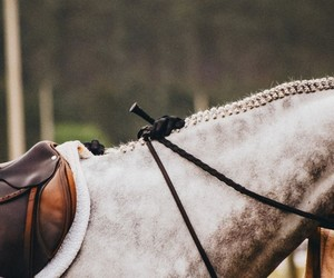 equestrian, horses, and photography image