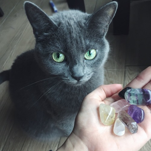 animal, cats, and crystals image