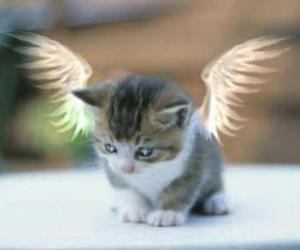 angel, cat, and angle image