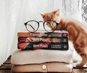 book, harry potter, and cat image