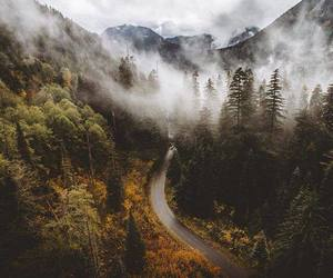 nature, forest, and road image