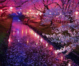 pink, japan, and nature image