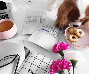 dog, flowers, and food image