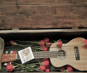 flower, gift, and instrument image