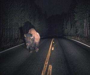 animals and dark image