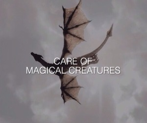 harry potter, care, and creatures image