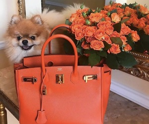flowers, bag, and dog image