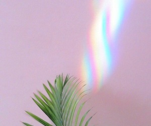 plants, wallpaper, and rainbow image