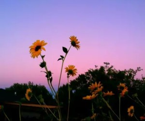 flowers, sky, and sunflower image