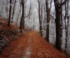 forest and winter image